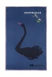 Australian Travel Board Travel Poster  Black Swann  Ca  1950s