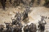 Wildebeest Migration, Masai Mara Game Reserve, Kenya Papier Photo par Paul Souders