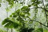 Rainforest Along Fortuna River