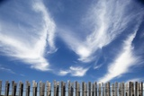 Cirrus Clouds in Summer Sky