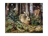 A Hare in the Forest Giclée par Hans Hoffmann