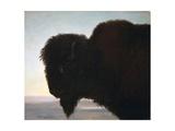 Buffalo Head Giclée par Albert Bierstadt