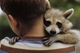 Boy Holding a Raccoon
