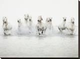 White Horses I Tableau sur toile par Irene Suchocki