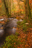 Autumn Colours around the River Teign and Hannicombe Wood Near to Fingle Bridge