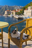 Waterside Cafe and Cat  Perast  Bay of Kotor  UNESCO World Heritage Site  Montenegro  Europe