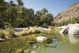 Wadi Bani Khalid  Oman  Middle East