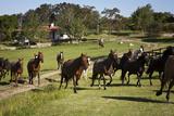 Horses at Estancia Los Potreros  Cordoba Province  Argentina  South America