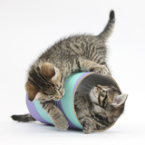 Two Cute Tabby Kittens  Stanley and Fosset  7 Weeks  Playing with a Tube