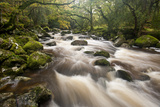 River Plym Flowing Through Dewerstone Wood  Dartmoor Np  Devon  England  UK  October