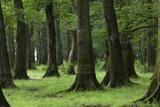 Common Oak (Quercus Robur) and Ash (Fraxinus Sp) Forest  Lonjsko Polje Np  Slavonia Region  Croatia
