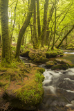 Golitha Falls  River Fowey Flowing Through Wooded Valley  Near St Cleer  Cornwall  UK  May 2012