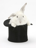 White Rabbit in a Black Top Hat