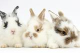 Three Cute Baby Bunnies Sitting Together Papier Photo par Mark Taylor