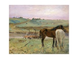 Horses in a Meadow Giclée par Edgar Degas