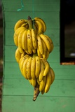 Bananas at a Fruit Stand in Dominican Republic