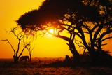 Silhouette of an African Elephant at Sunrise
