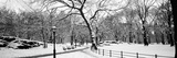 Bare Trees During Winter in a Park  Central Park  Manhattan  New York City  New York State  USA