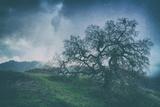 Moody Tree Landscape  Mount Diablo