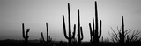 Silhouette of Saguaro Cacti (Carnegiea Gigantea) on a Landscape, Saguaro National Park, Tucson Papier Photo