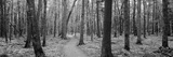 Usa  Michigan  Black River National Forest  Walkway Running Through a Forest