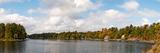 Trees at the Riverside  Moon River  Bala  Muskoka  Ontario  Canada
