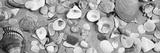High Angle View of Seashells Papier Photo