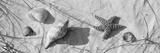 Close-Up of a Starfish and Seashells on the Beach, Dauphin Island, Alabama, USA Papier Photo