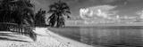 Palm Trees on the Beach  Matira Beach  Bora Bora  French Polynesia