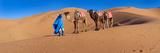 Tuareg Man Leading Camel Train in Desert  Erg Chebbi Dunes  Sahara Desert  Morocco
