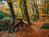 Trees with Granite Rock at Huelgoat Forest in Autumn  Finistere  Brittany  France