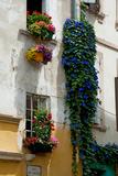 Building with Flower Pots on Each Window  Rue Des Arenes  Arles  Bouches-Du-Rhone