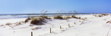 Tall Grass on the Beach  Perdido Key Area  Gulf Islands National Seashore  Pensacola  Florida  USA