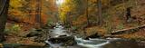 Fall Trees Kitchen Creek Pa