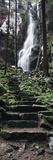 Track to a Waterfall in a Forest  Burgbach Waterfall  Black Forest  Baden-Wurttemberg  Germany