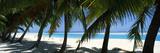 Palm Trees on the Beach  Aitutaki  Cook Islands