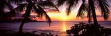 Palm Trees on the Coast  Kohala Coast  Big Island  Hawaii  USA