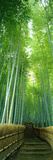 Path Through Bamboo Forest Kyoto Japan Papier Photo