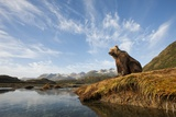 Brown Bear and Mountains  Katmai National Park  Alaska