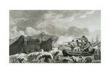 Captain Cook's Men Shooting Sea Horses