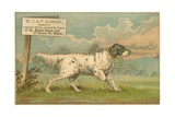 WJ and F Quennell Trade Card with an English Setter