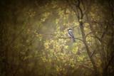 Chickadee in the Rain