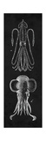 Squid Study Reproduction d'art par N. Harbick