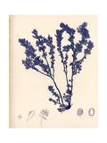Blue Botanical Study III