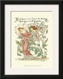 Shakespeare's Garden III (Rose)