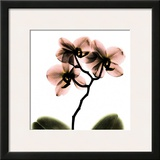 Crystal Flowers X-ray  Orchid
