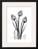 Tall Early Tulips N Black and White