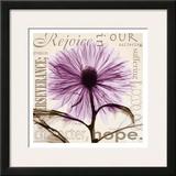 Rejoice  Violet Chrysanthemum