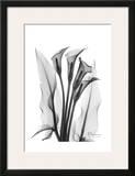 Calla Lily Quad in Black and White