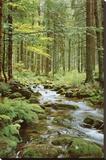 Ruisseau sylvestre Tableau sur toile